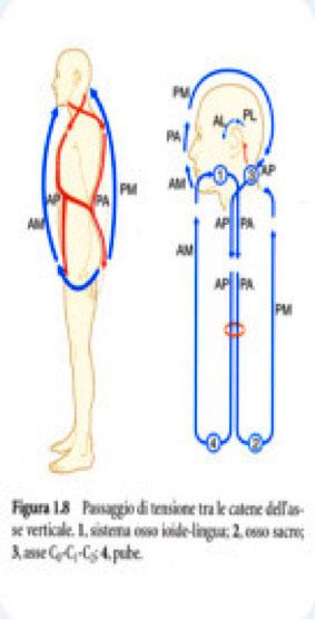 osteopatia4