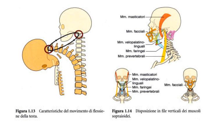osteopatia9